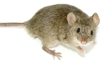 Identifying Rodent Locations