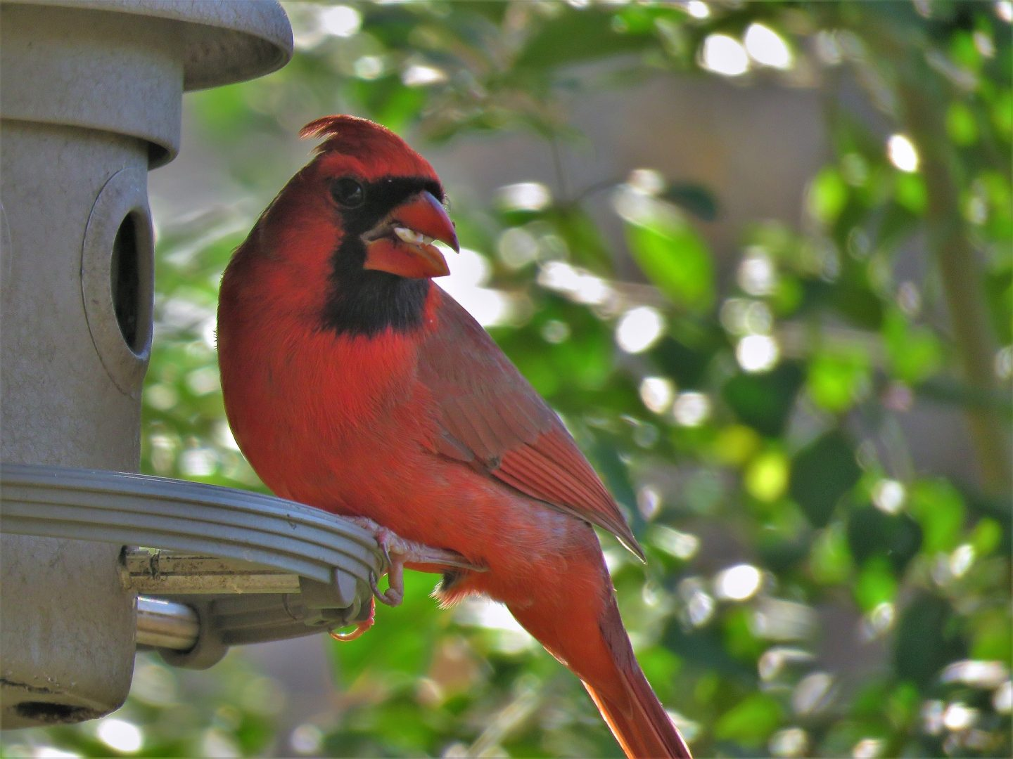 Help your feathered friends this winter by turning your yard into a bird sanctuary