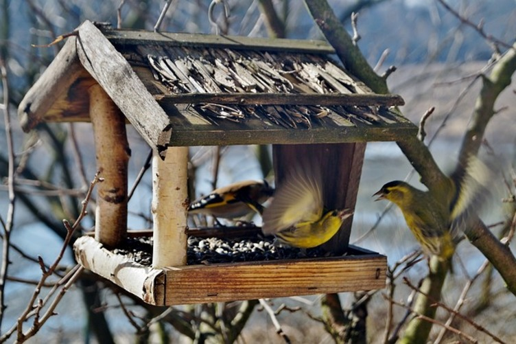 How to Turn Your Backyard Into a Songbird Sanctuary