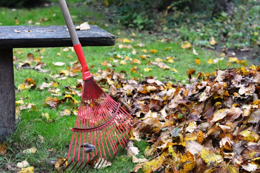 Rake leaves: first step to prep your lawn this fall