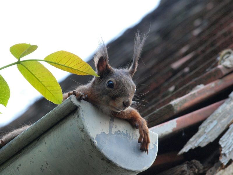 clean gutters to prep your home this fall